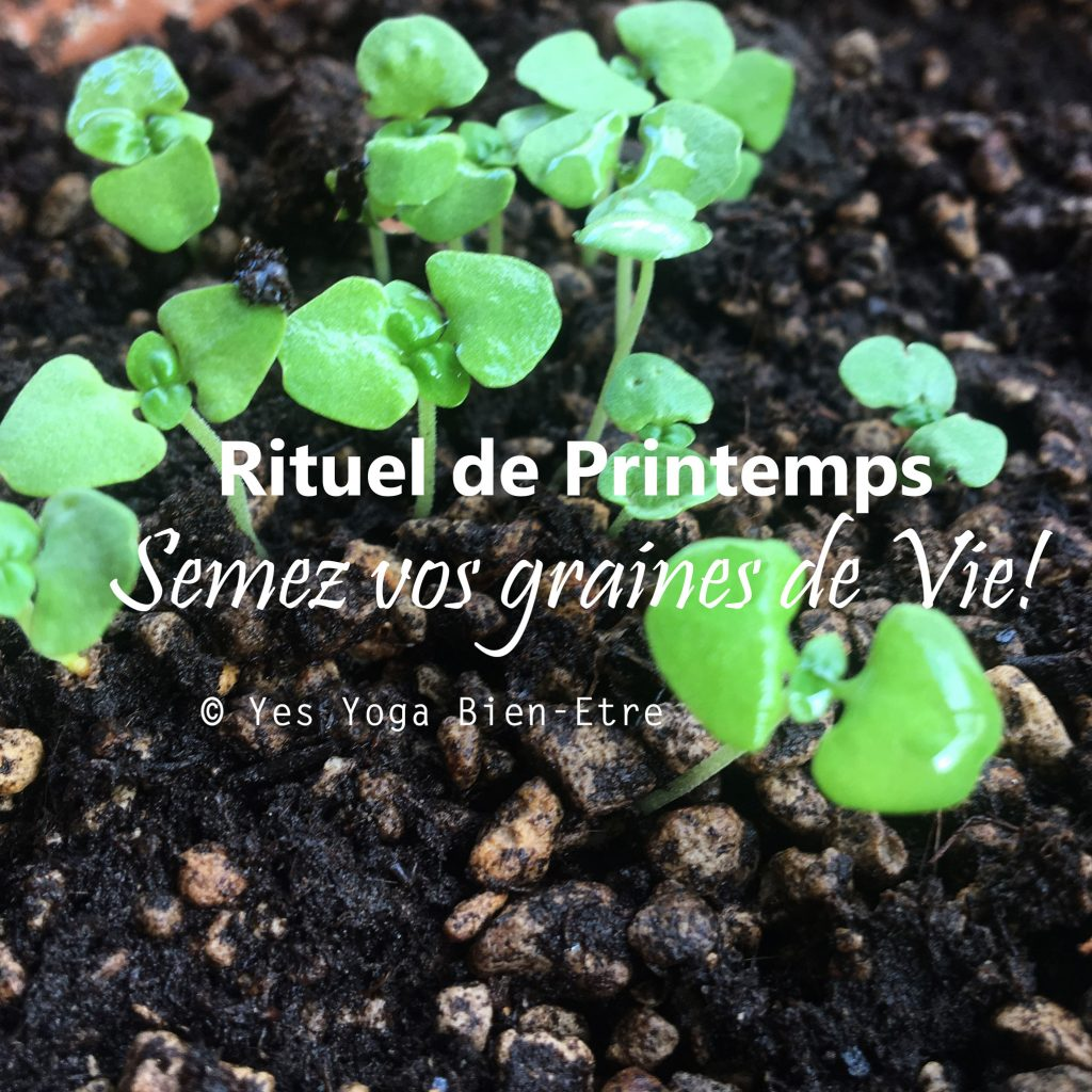 Semer des graines de vie rituel de printemps