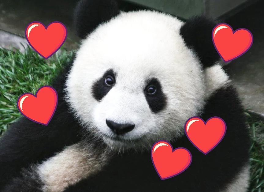 Amour pour soi: panda qui s'aime lui-même