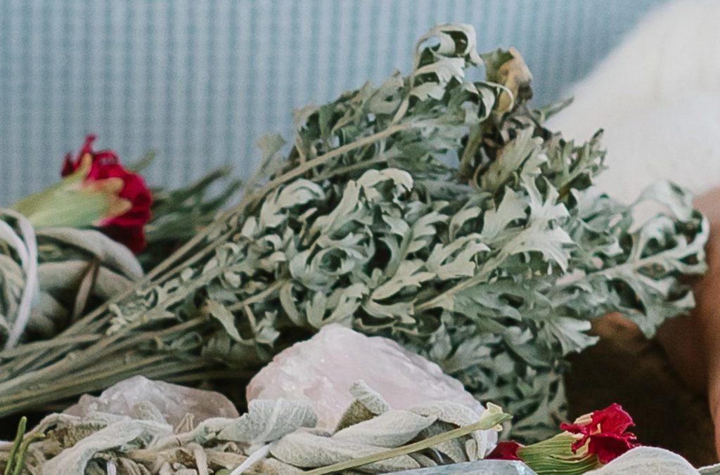 Plante sacreée: Feuilles d'armoise séchées / Artemisia vulgaris