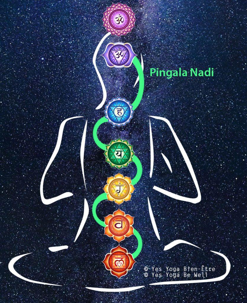 Pingala Nadi / 7 Chakras