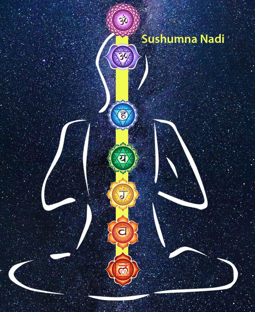 Sushumna Nadi / 7 Chakras