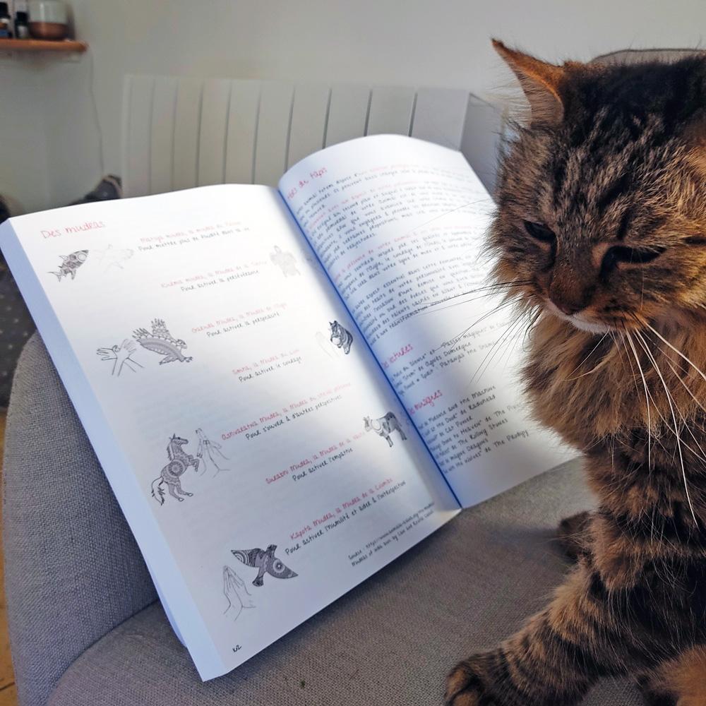 Chat lisant le livre Tapis Volants